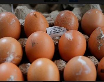 SAG realiza decomiso histórico de 34.820 huevos de gallina, producto de alto riesgo zoosanitario