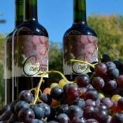 Presentan proyecto de ley que busca dar denominación de origen a vino del Tamarugal, que produce la UNAP