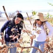 Universidad Arturo Prat lanzó proyecto de Enoturismo del Vino del Desierto, que se desarrolla en Planta Experimental de Canchones