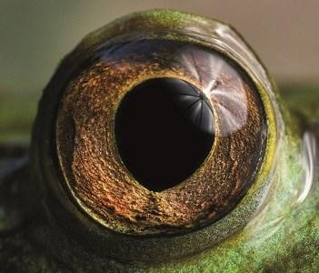 """Concurso fotográfico """"Ojo de Pez"""" premia con un viaje a la Antártica: Hasta el 1 de octubre se recibirán fotografías de ecosistemas acuáticos nacionales"""