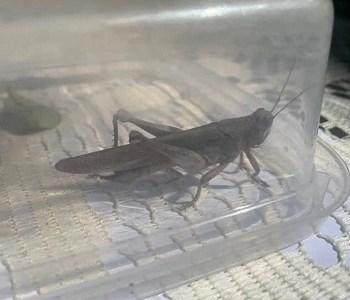 Aumenta la atención de denuncias por presencia de insectos y diversas plagas en la comunidad