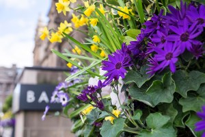 Window box flowers on your Spring Break in Edinburgh