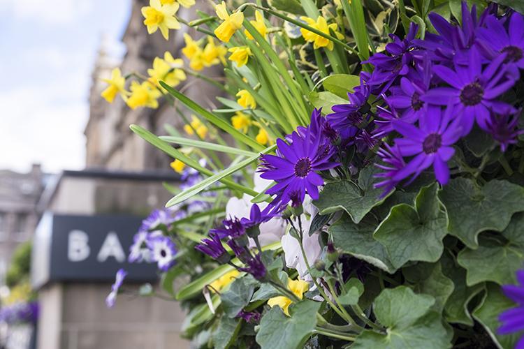 Window box flowers on your Spring Break in Edinburgh