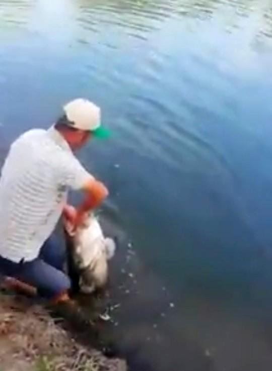 Meriç nehri'nde yakalandı, tam 50 kilo