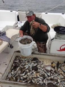 Cap'n Clif on an Edisto Island shrimp tour