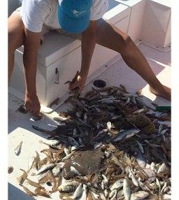 Sorting the catch on an Edisto Island shrimp tour