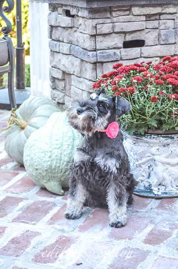 Fall on the Patio   Edith & Evelyn Vintage   www.edithandevelynvintage.com