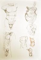 Anatomia korpusu ludzkiego