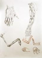Anatomia ręki