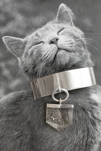 In Catvertisements Cats Wearing Jewelry