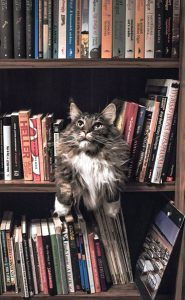 alchemy-book-editor-cat-bookcase-shelves