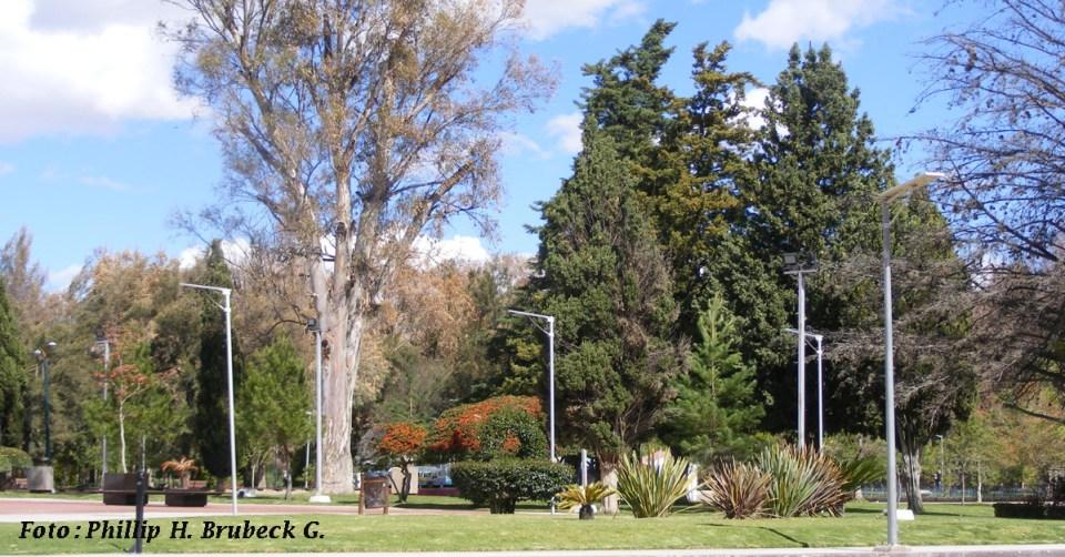 Árboles parque