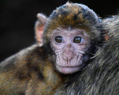 """""""Macacos me mordam"""". Risco de Febre Amarela deixa a população de Peruíbe assustada"""