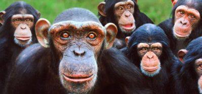 Bem Menos que Macacos
