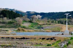 南三陸町、戸倉。桜が美しく咲いているあたりには、家があったのだ。