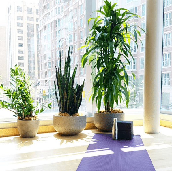 Why I Love The New Equinox Yorkville - Gracie Carroll