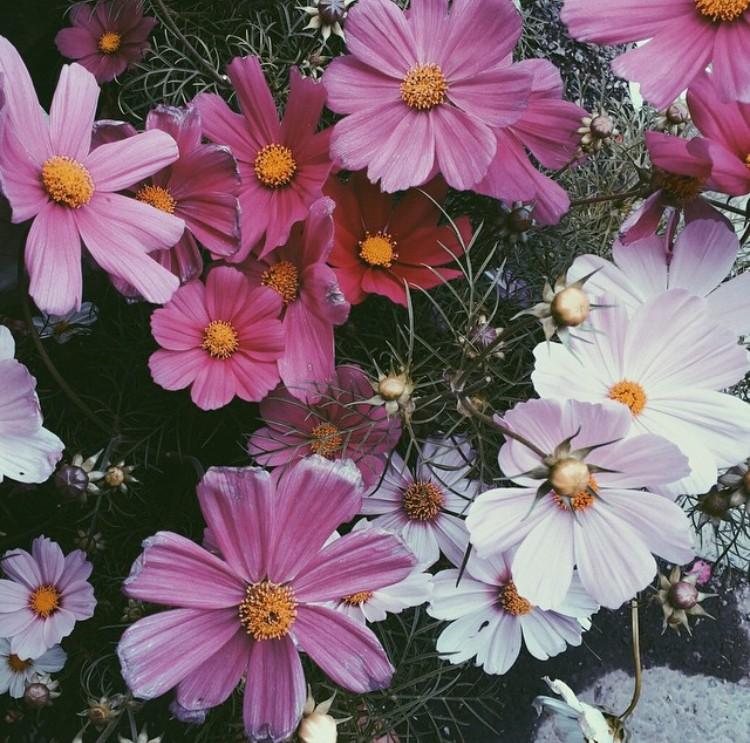 flowers bouquet instagram edit seven 2018