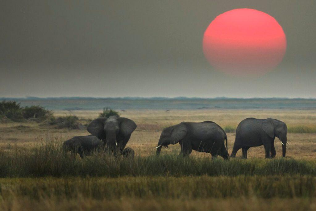 amarula elephant - world elephant day