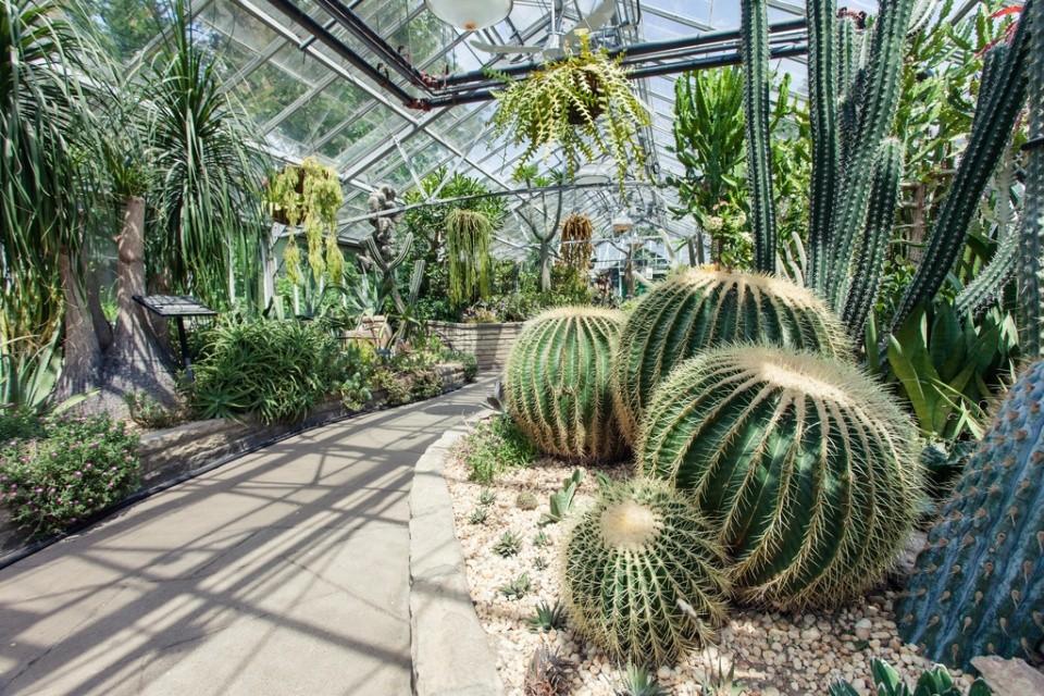 Cactus-House-Allan-Gardens-Conservatory