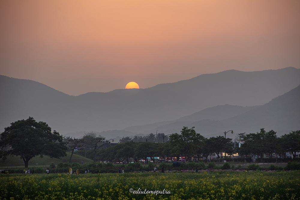 Main Ke Gyeongju, Sambil Lihat Sunset Bersama Bunga