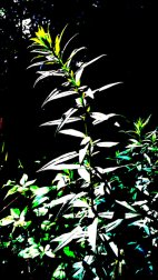 Unknown_150729_120537_IMG_1294-1