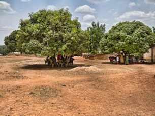 Meeting to discuss translation in the Nawuri language under mango trees