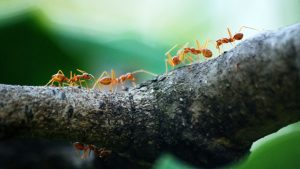macro photo of five orange ants