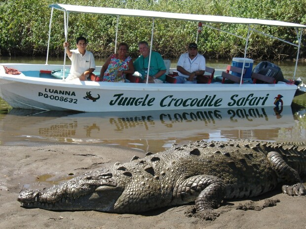 costa rica jungle_crocodile_safari_tour_picture