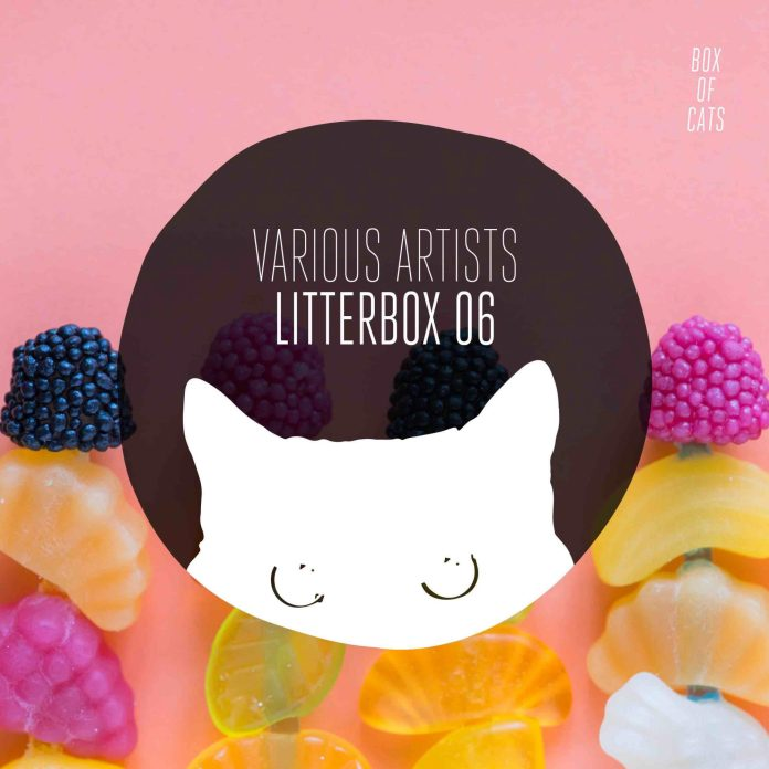 Box of Cats Litterbox 06