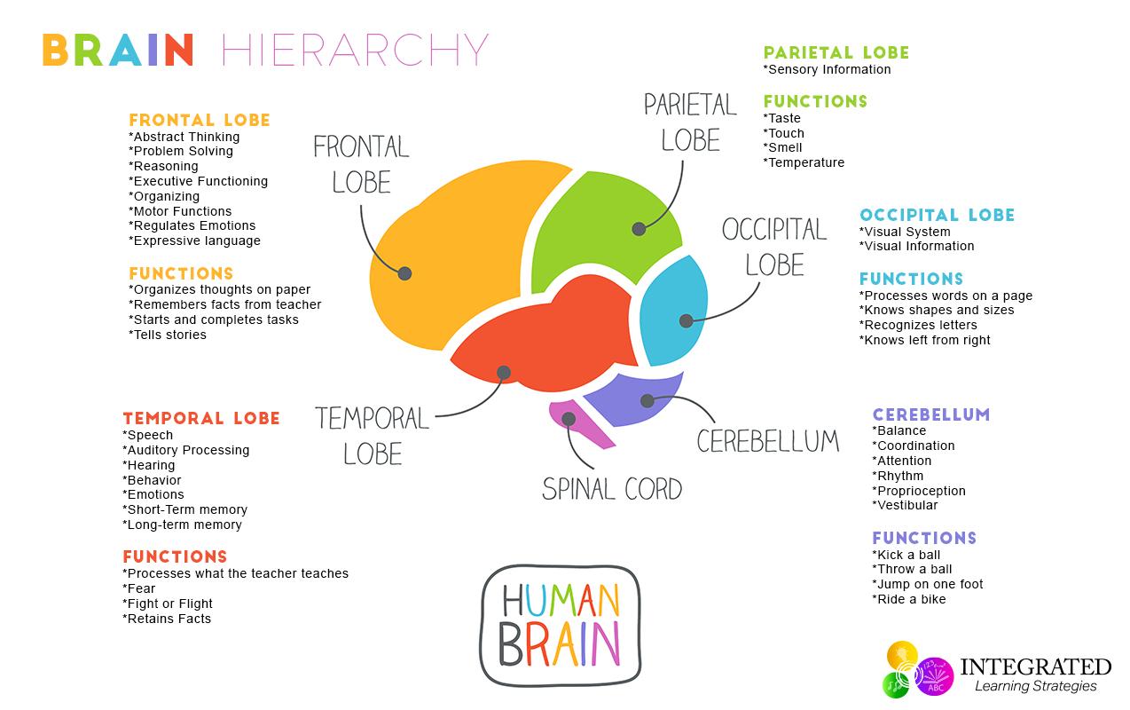 Trauma Therapy Worksheet Preschool