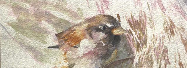 watercolor by Edna Carla Stradioto