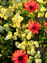 Terrace colours