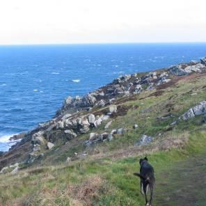 Blaize our wonderful lurcher dog