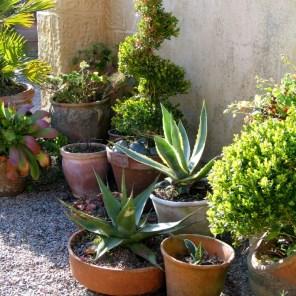 The Mediterranean style Courtyard