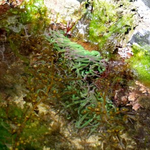 unpolluted rock pool in cornwall