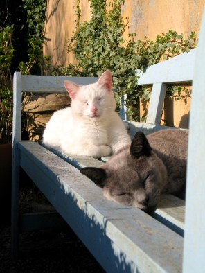Cats enjoying the spring sunshine