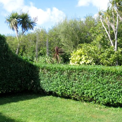 Formal and natural planting in Cornwall