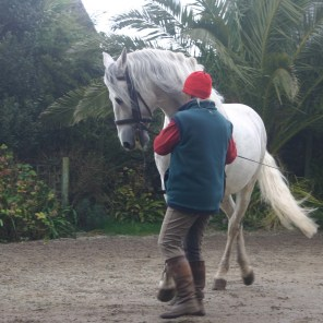 Pura raza espanola Stallion at Ednovean Farm in Cornwall