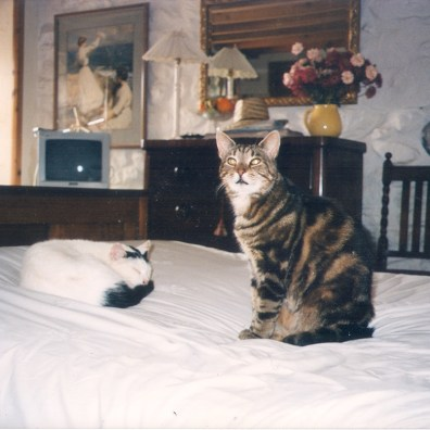 "Esso was fond in one of our hedges as a tiny kitten and became a farm cat. he moved in when we did and became a ""House Cat"" and wasn't allowed in the bedrooms. Photo from Germany I believe!"