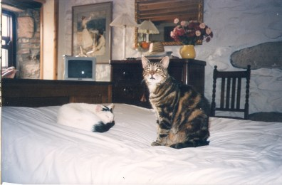 """Esso was fond in one of our hedges as a tiny kitten and became a farm cat. he moved in when we did and became a """"House Cat"""" and wasn't allowed in the bedrooms. Photo from Germany I believe!"""