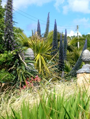 Echiums and grasses compete for space this month, in the vibrant June garden