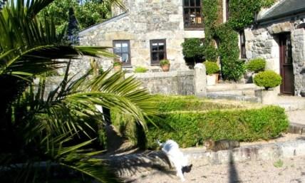 Cats in teh courtyard at Ednovean Farm
