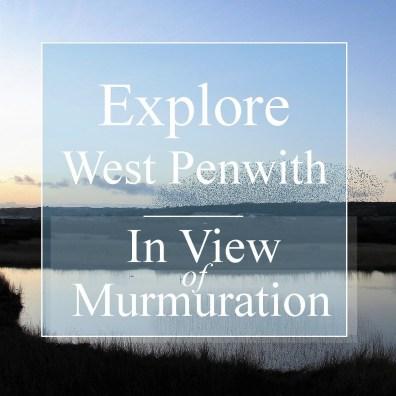 Explore West Penwith murmuration Marazion marsh