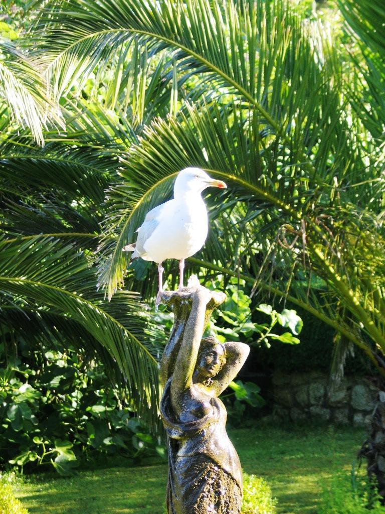 Seagull on a fountain