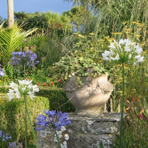 Urn and Agapanthus