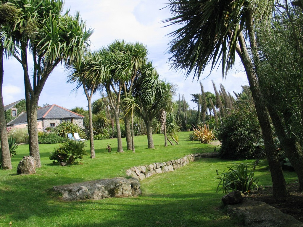 sheltering palms in a cornish garden