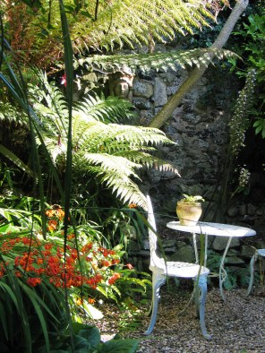 Tree ferns and sunlight