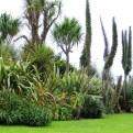 A border in a coastal garden