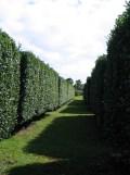 Italian Garden Aisle