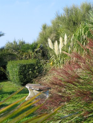 Miscanthus and Pampas grass